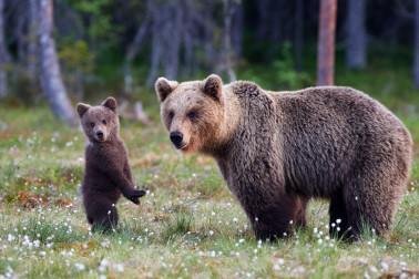 Der Nationalpark Bayerischer Wald beeindruckt mit seiner einzigartigen Tierwelt